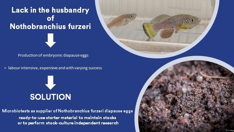 husbandry of Nothobranchius furzeri